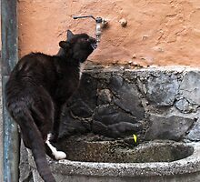 cat drinks from the tap by Anne Scantlebury