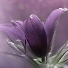 (A) LOVELY LAVENDER-Lavender MUST be the predominate color
