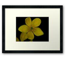 Black n Gold Framed Print