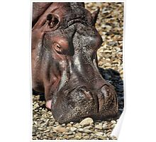 Hippo Extreme Poster