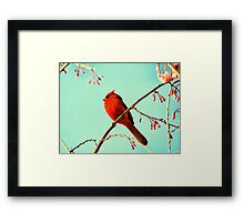 Cardinal & Cherry Blossoms Framed Print