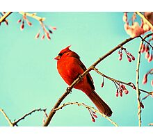 Cardinal & Cherry Blossoms Photographic Print
