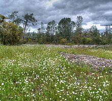 Folsom Prairie by Diego  Re