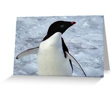 Adelie Penguin Portrait Greeting Card