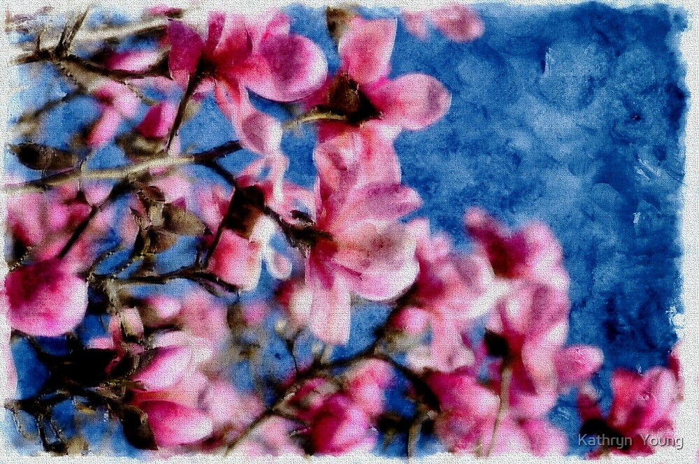 Cherry Blossoms by Kathryn  Young