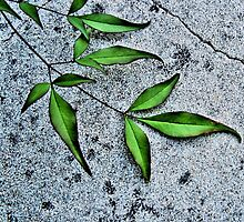 Branching Out by julieapearce