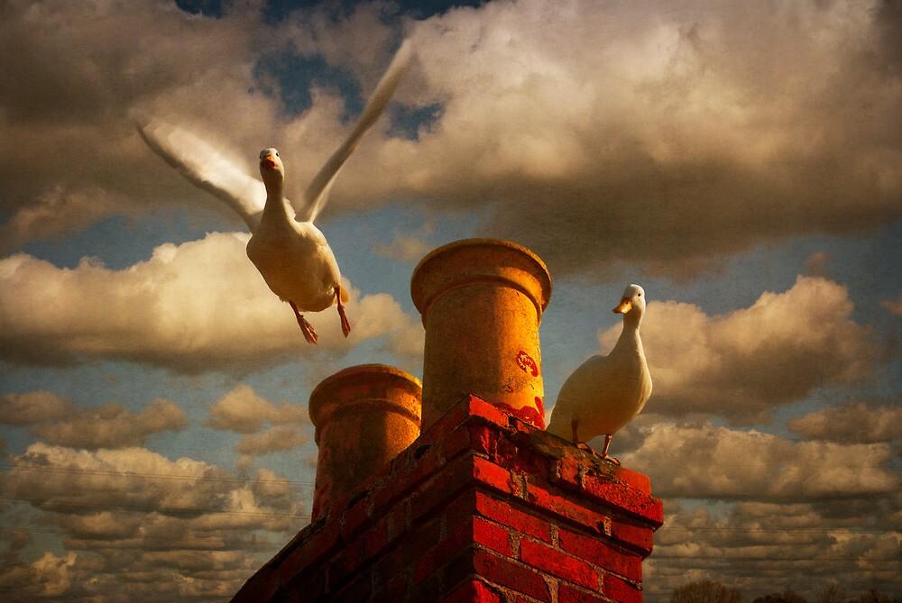 White Ducks by ajgosling