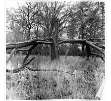 Crucifix Tree, Phoenix Park Poster