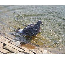 Pigeon washing Photographic Print