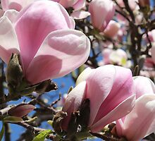 Pink Welcome to Spring by karina5