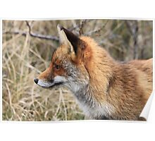 Red Fox 3340 Poster