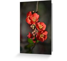 Red Flowering Quince Greeting Card
