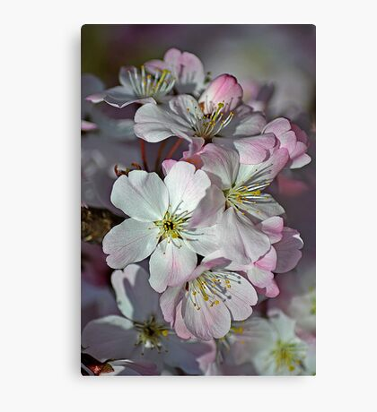 Pink Spring Blossom Canvas Print