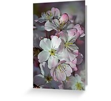 Pink Spring Blossom Greeting Card
