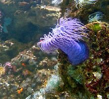 Flower of the Sea by HaleyRenee
