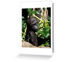 Baby Western Lowland Gorilla Greeting Card