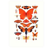 Orange Insect Collection Art Print
