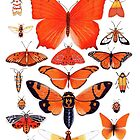 Orange Insect Collection by Vicky Pratt