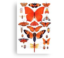 Orange Insect Collection Canvas Print