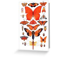 Orange Insect Collection Greeting Card