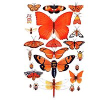 Orange Insect Collection Photographic Print
