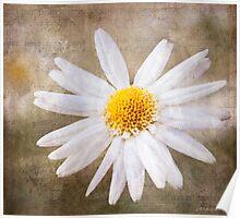 Daisy 2012 Poster