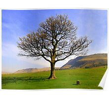 A tree on a hill Poster