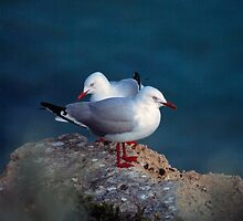 silver gulls (Yorke Peninsula) by Janine Paris