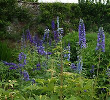 Delphiniums #1 in Harmony Garden by Babz Runcie