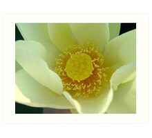 Heart Of The Water Lily Art Print