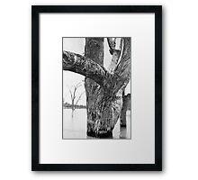 trunk detail, river red gum (River Murray) Framed Print