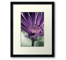 Purple Haze... Framed Print