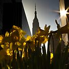 Tulips in NYC by jojocraig