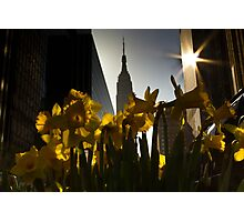 Tulips in NYC Photographic Print