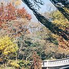 Central Park, Fall Colors, New York by lenspiro