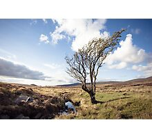 Lone Tree - Sally Gap Photographic Print