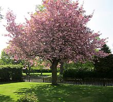 Summer Cherry Blossoms by xxAuroraxx