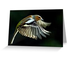 Chaffinch in flight Greeting Card