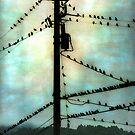 For the Birds by Elizabeth Bravo