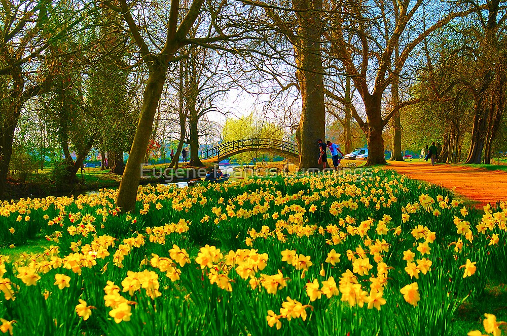 A host of golden daffodils by Eugene Francis Cummings