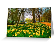 A host of golden daffodils Greeting Card