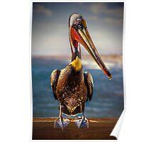 Plump Peter Pelican's Pier Photo Pose Poster