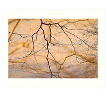 Branches Over Bow Creek At Low Tide .. Art Print