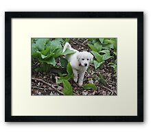 Torro Among The Skunk Cabbage Framed Print