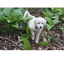 Torro Among The Skunk Cabbage Photographic Print