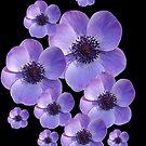 Anemones by Gillian Cross