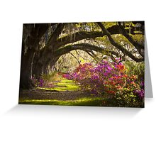 Charleston SC Magnolia Plantation Gardens - Memory Lane Greeting Card