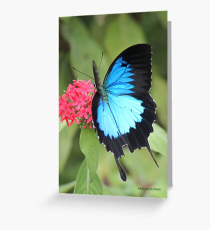 beautiful blue Greeting Card