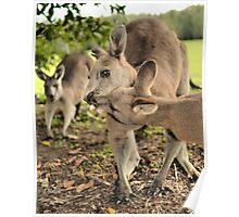 Kangaroo Kisses Poster