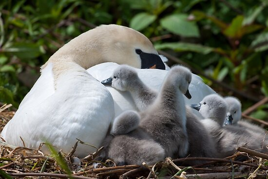 I want to sleep! Barrow Navigation, Tinnahinch, County Carlow, Ireland by Andrew Jones